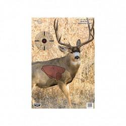 Pregame Mule Deer 16.5? x 24? Tgt - 3 Tgt BIRCHWOOD-CASEY