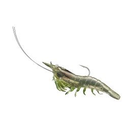 Rigged Shrimp Soft Plstc,grass shrimp,1/0 LIVETARGET-LURES